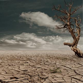 Cambio Climático: 5 acciones que puedes hacer para frenarlo